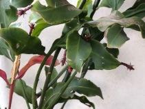The pregnant plant