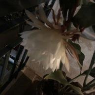 The flower in bloom