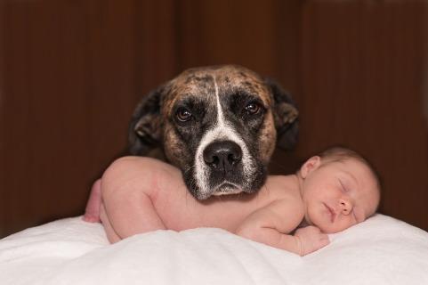 dog baby love